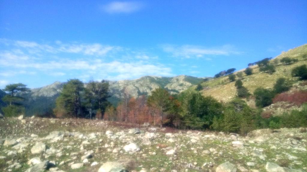 GR20, near the Plateau de Gialgone
