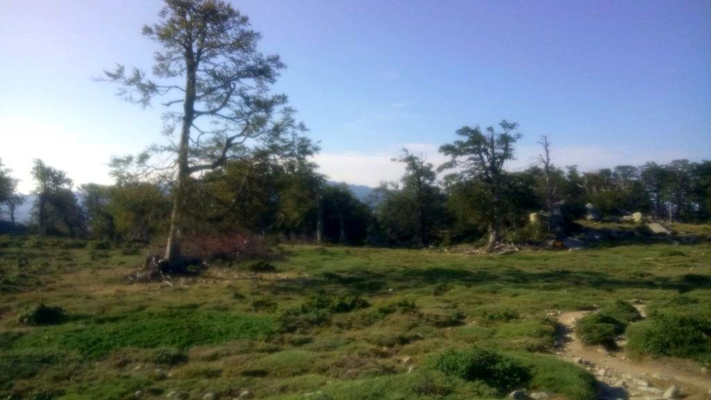 GR20, meadow near Zicavo