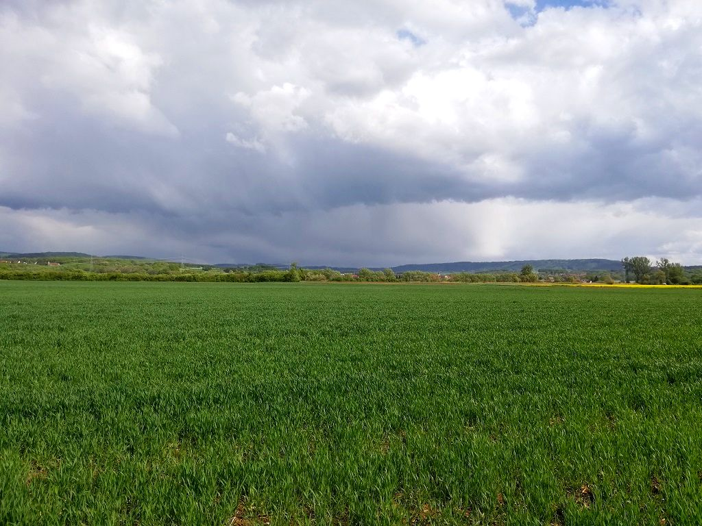 Fields near Forchheim (view to the south)