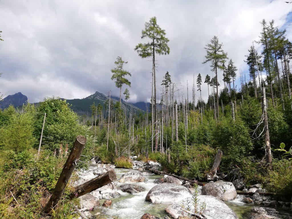 Near Hrebienok, stream Studený potok and spruce vegetation