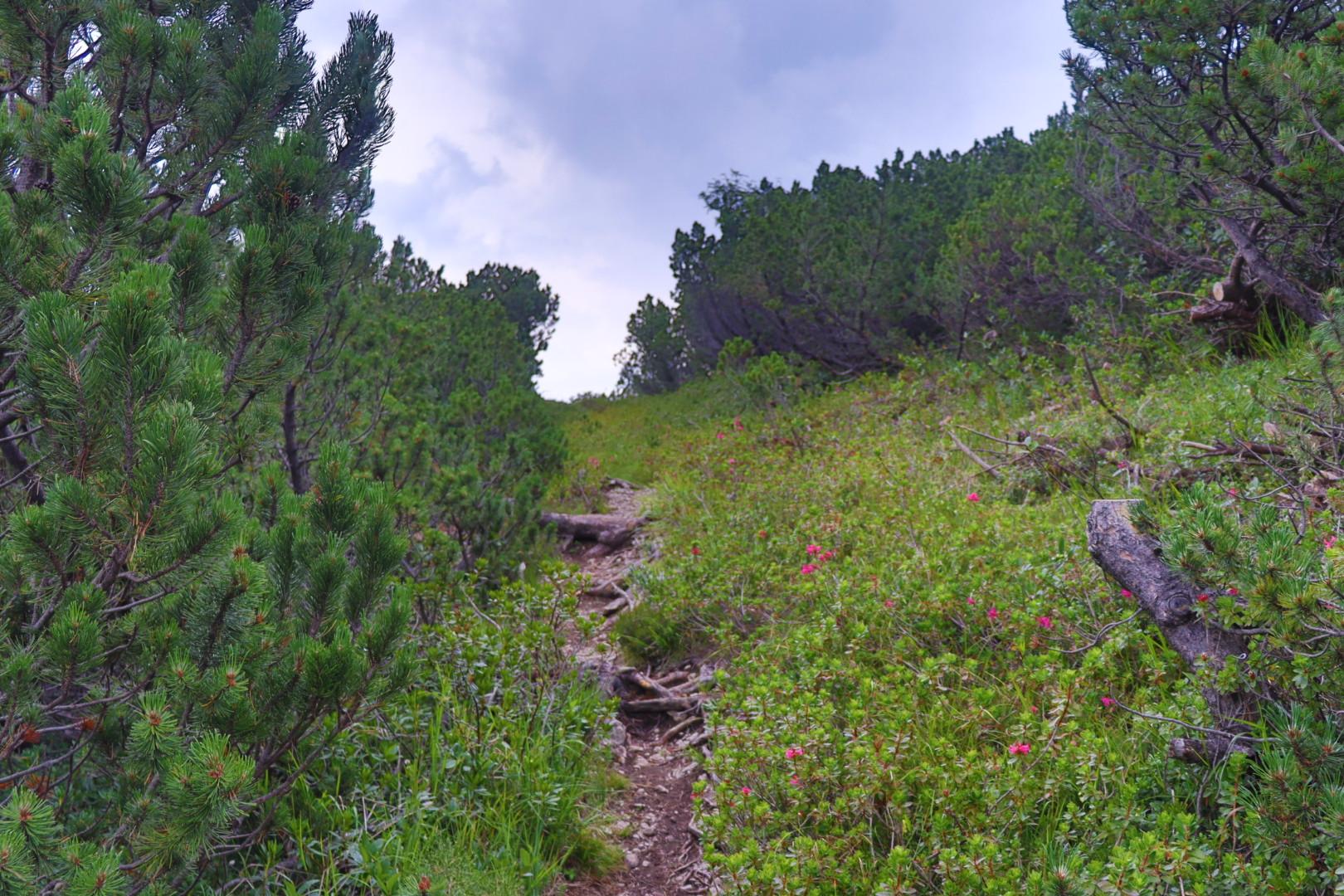 Ascent to Cima Roccapiana